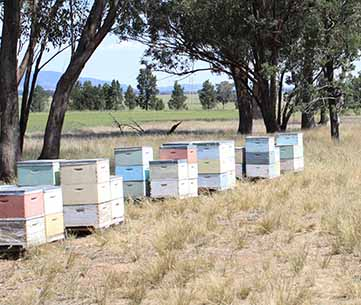 Beehives and trees