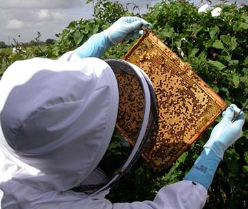 Food and Environment Research Agency (Fera), Crown Copyright