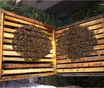 Randy Oliver, www.scientificbeekeeping.com