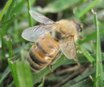 www.beekeepingforum.org