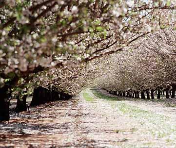 Almond Board of Australia