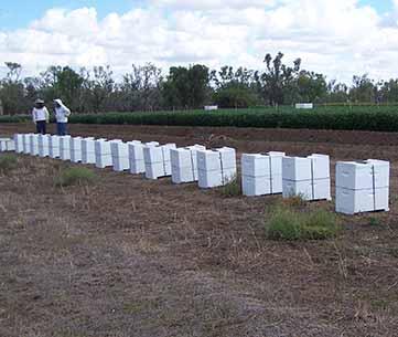 Bryn Jones, Crop Pollination Association