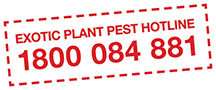Exotic Plant Pest Hotline