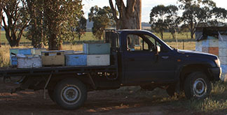 Hives on ute