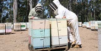 Beekeepers in apiary