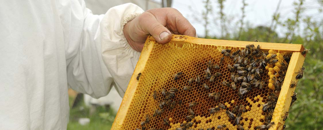 Hive-inspection-homepage