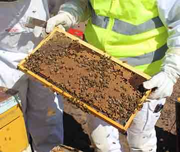 hive-inspection