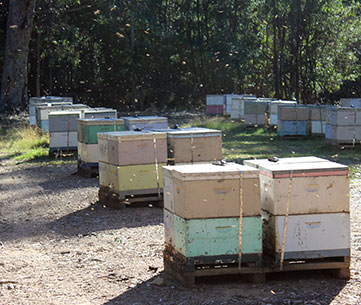 hives-in-barrier-system