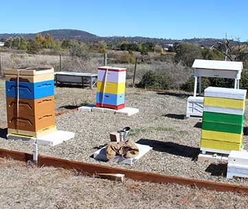 variety-of-hive-types