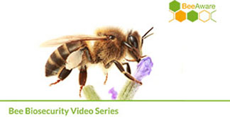 bee-biosecurity-video-series-generic-title-slide