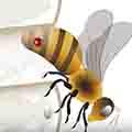 varroa-on-bee-diagram