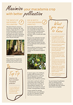 MAximise your macadamia crop with better pollination