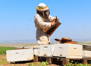 Supporting native bee populations « Bee Aware